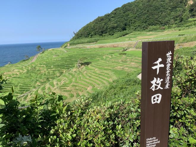 小さな田んぼが海岸まで連なる絶景、世界農業遺産「白米千枚田」