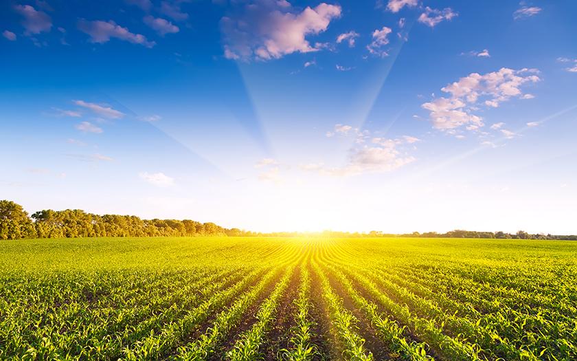 大地に親しむ仕事がしたい!個人事業で農業をするには