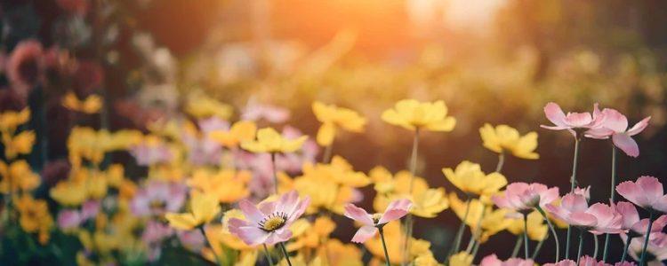 花粉症改善