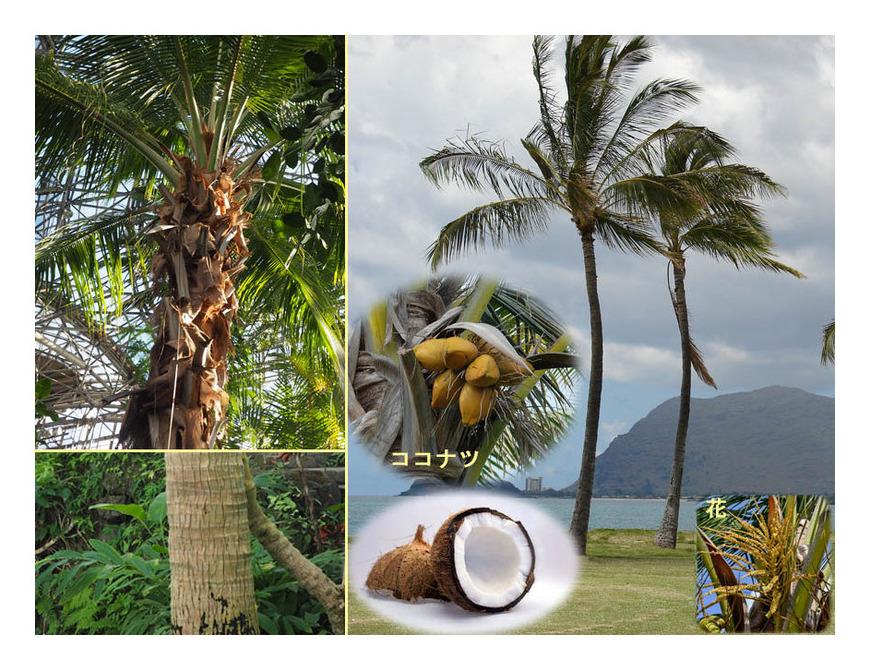 熱帯果樹(6)