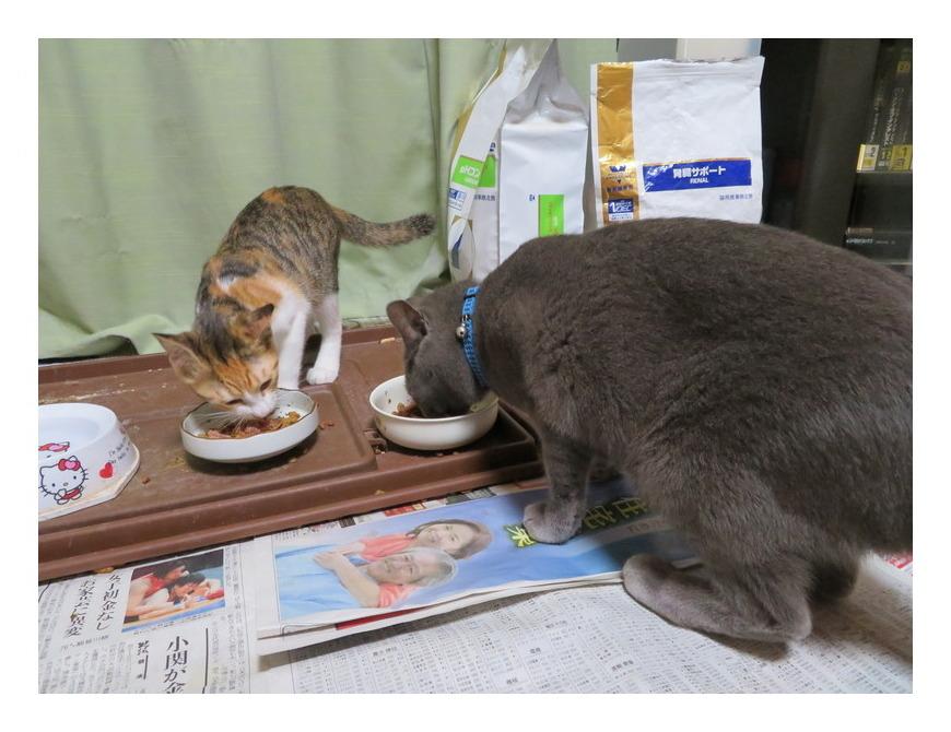 仲良く食事