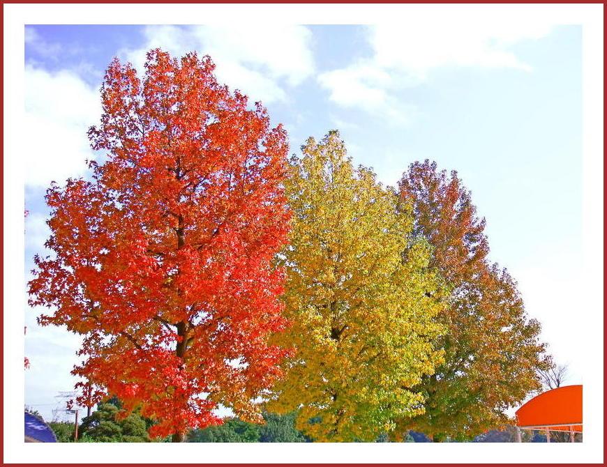 それぞれの秋色