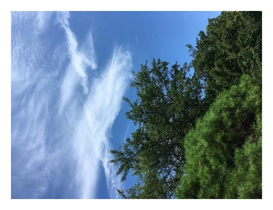 雲が鳥にみえませんか?