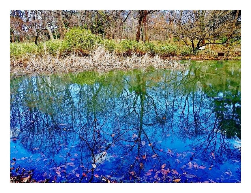 秋に映える沼