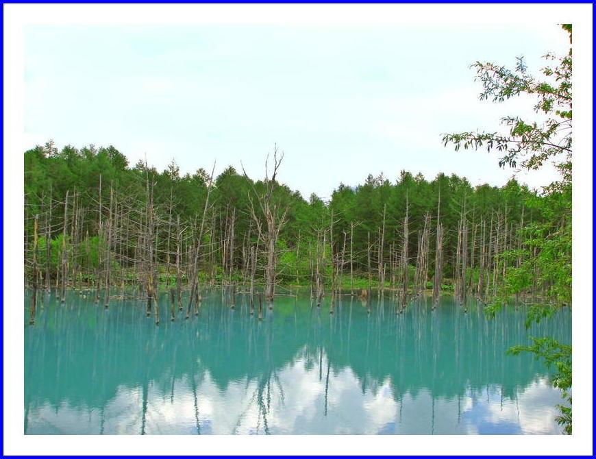 美瑛、青い池