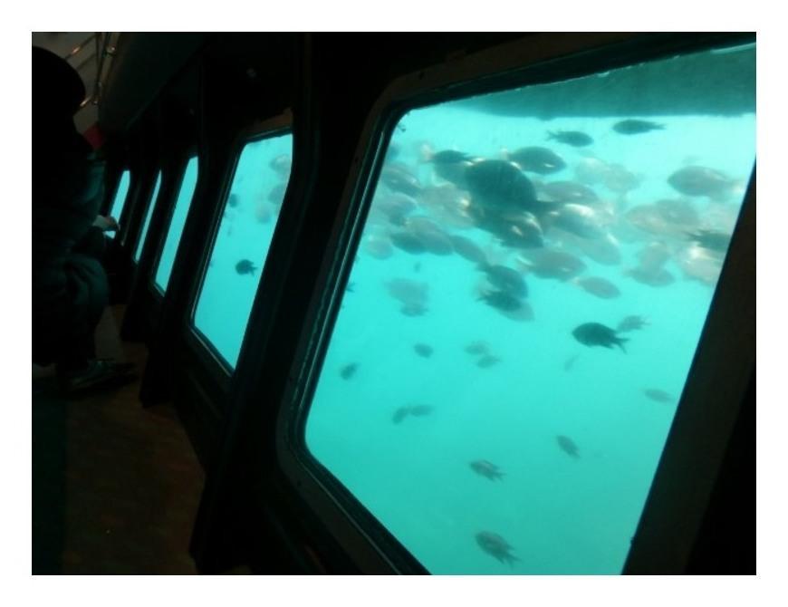 三崎海中観察船