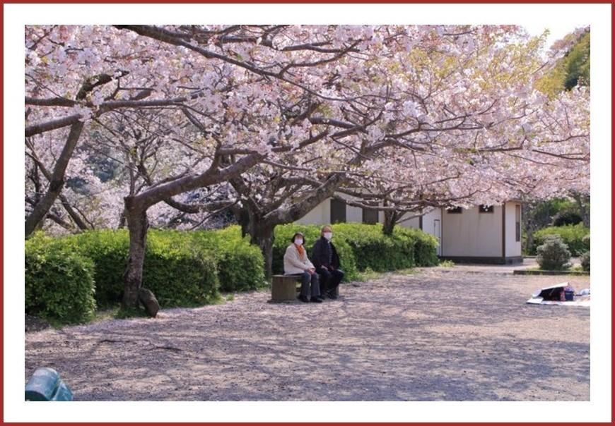 桜撮りの〆