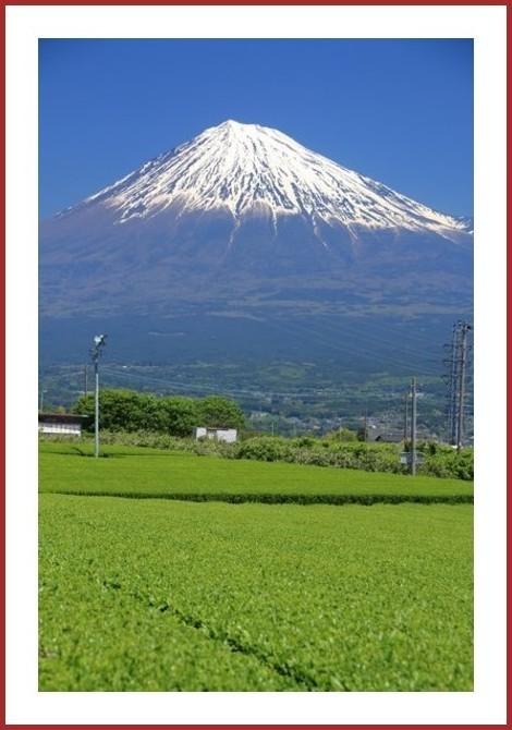 新茶に映える富士