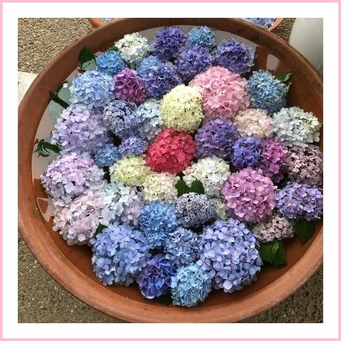 紫陽花フロート