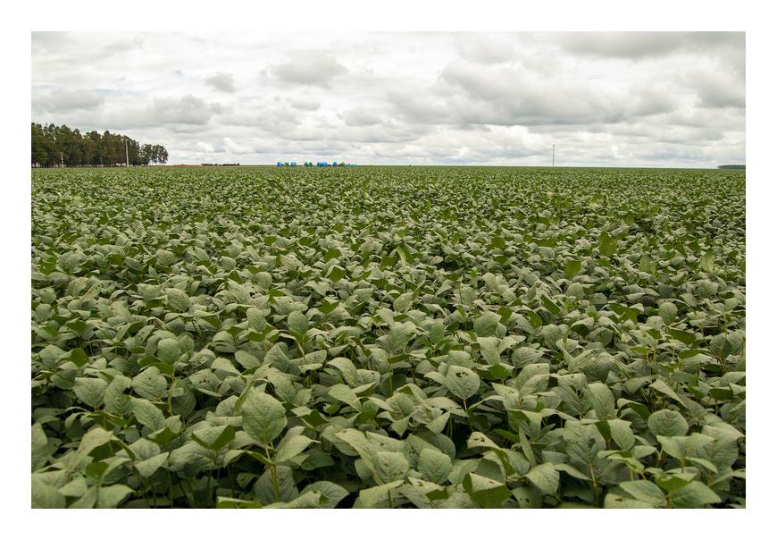 ブラジルの大豆畑