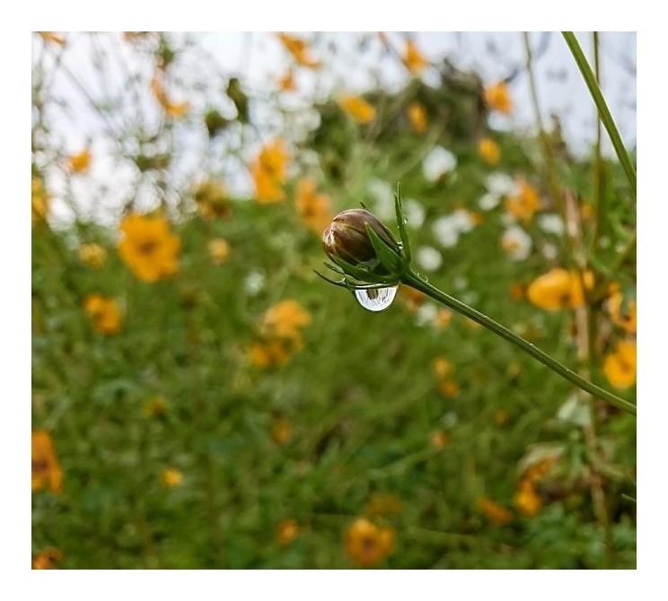 「雨の忘れ物」