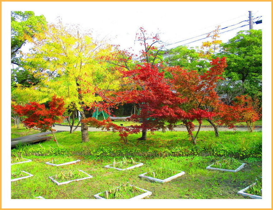 公園の紅葉(part2)