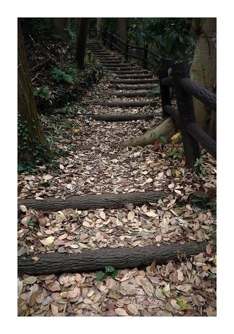 枯葉の積もった散歩道