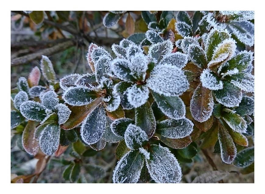 「凍りの華」