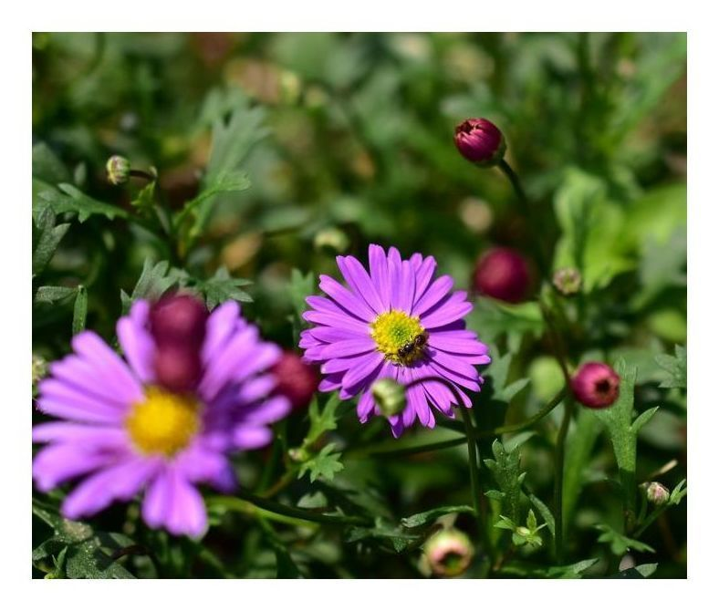 薔薇園の花たち-その3