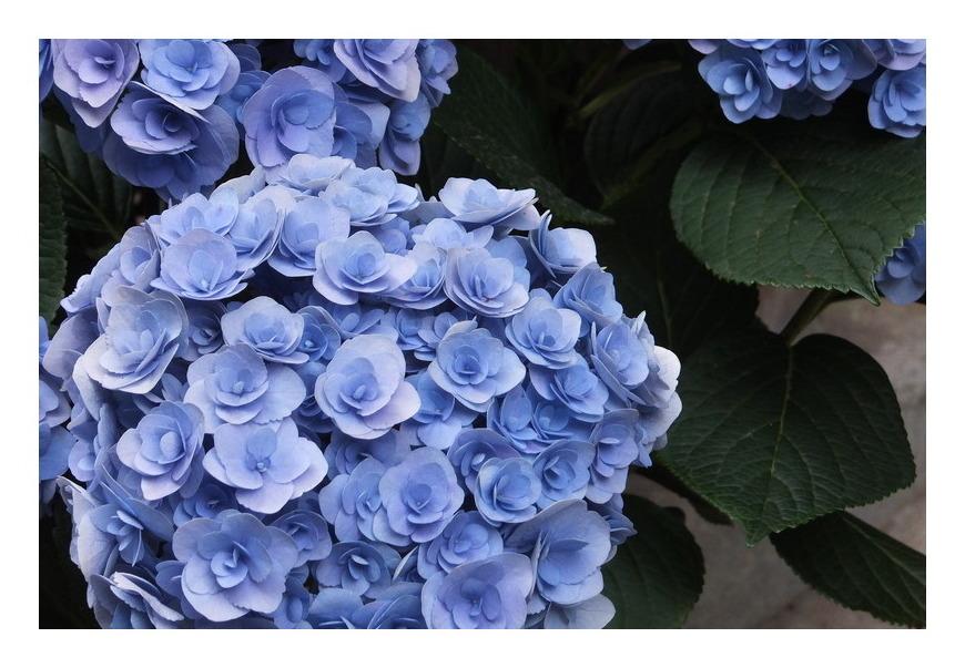 鎌倉の春2