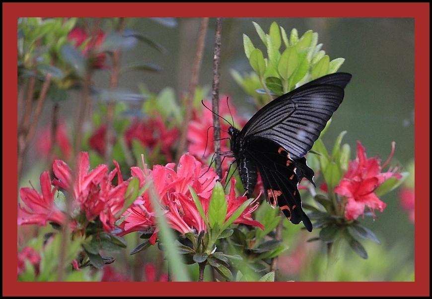 蝶々・蜻蛉も鳥のうち・・・?