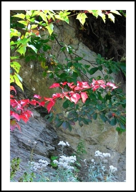 夏の花と紅葉が同時に存在する季節…