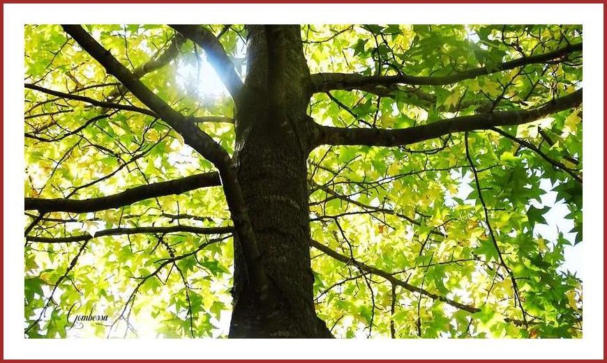秋の色を探しに