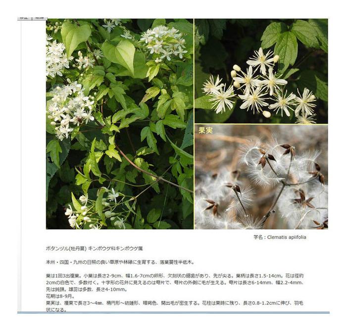 植物図鑑登録750種目
