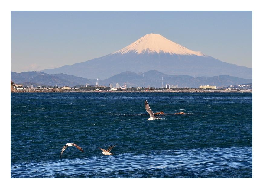 富士山とカモメ