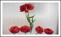 妖艶な色の花・・