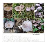 植物図鑑掲載2400種目