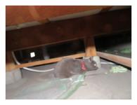 床下の大ネズミ?