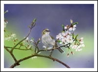 鶯のお花見〜♪(PC絵画)