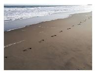 九十九里浜を歩いてみた