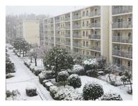 思わぬ降雪