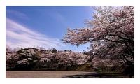 「春爛漫」