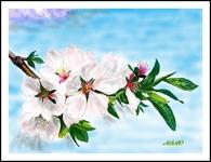 アーモンドの花(PC絵画)