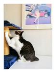 捨猫のミー
