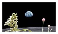 月面にもこんな花が?・・・