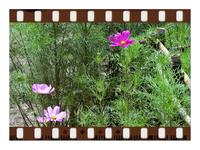 秋への誘(いざな)い...自然界