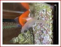 金魚と仏像