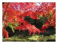 散歩道での紅葉
