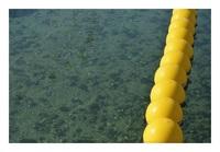 人工海浜に育つ牡蠣