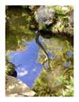 殿ヶ谷戸庭園の水鏡…
