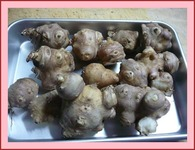 菊芋 掘りました