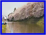 満開の桜の下で(山形)