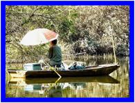 夏日を釣る
