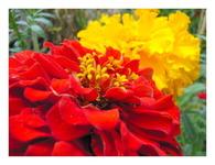 菜園の花たち