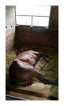 馬も横になって寝る!