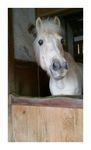 ちょっと覗いた馬