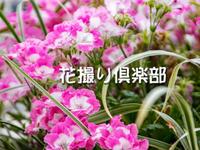 花撮り倶楽部